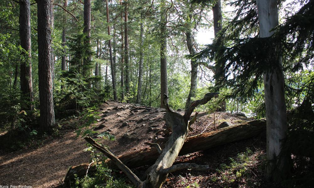 Liesjärven kansallispuisto, Tammela.